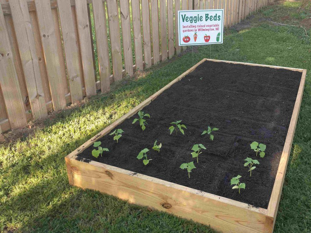 Veggie Beds raised bed installation testimonial