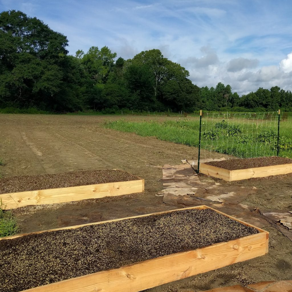 Open field with raised vegetable gardens.